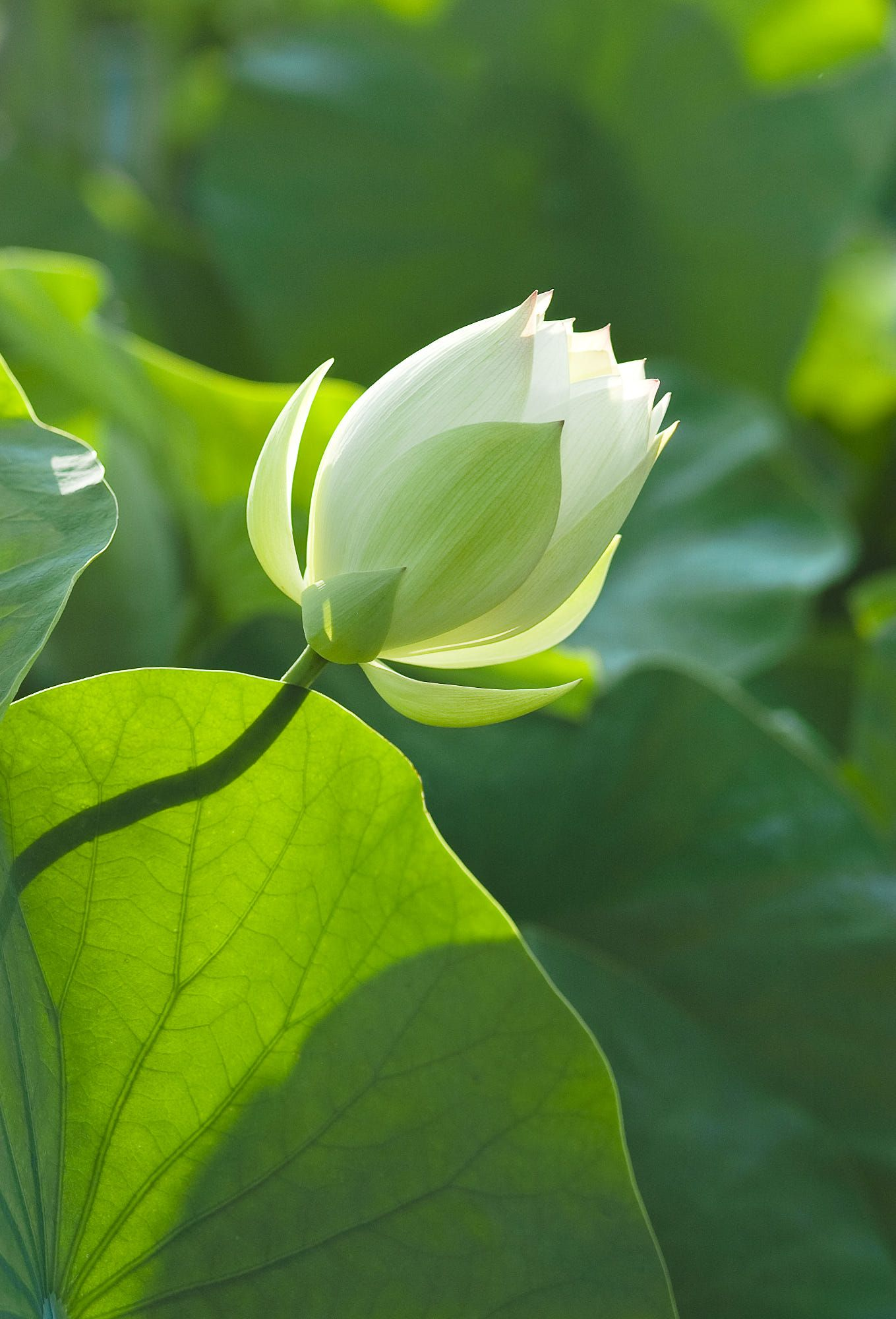 Pin by my info on nature pinterest park lotus and flowers izmirmasajfo