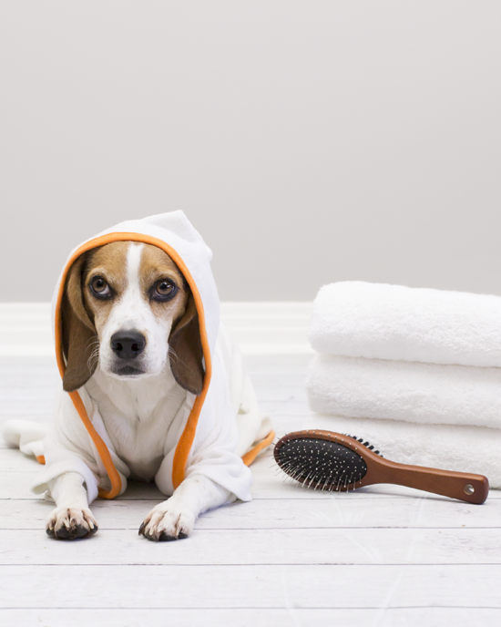 Dog Bath 6 Tips To Make Dog Baths Easy Pawsh Magazine Dog Bath Dog Wellness Pet Wellness