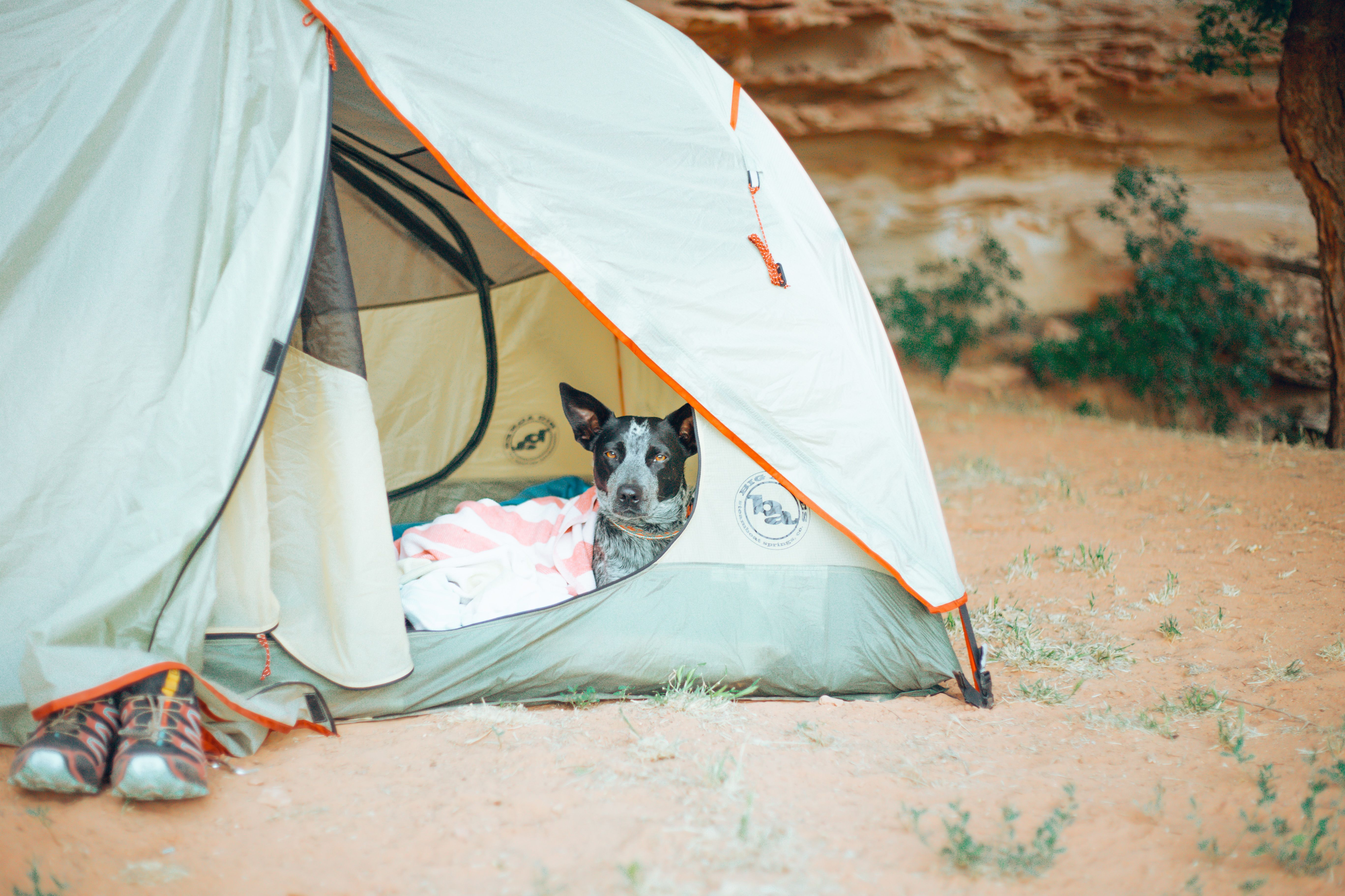 Pet friendly camping near you on Hipcamp. 🐾🏕   Camping ...