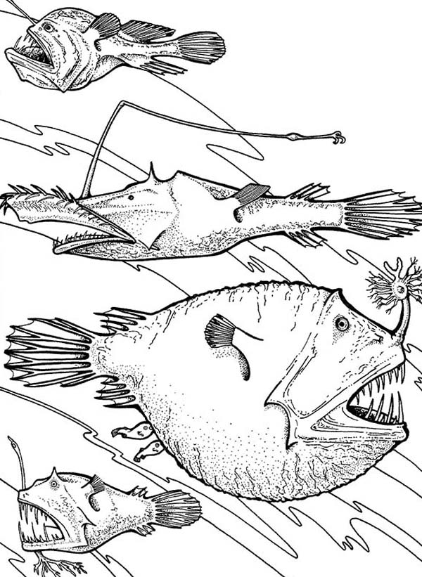 Angler Fish Is Deep Sea Fish Coloring Pages Best Place To Color Deep Sea Animals Fish Coloring Page Angler Fish