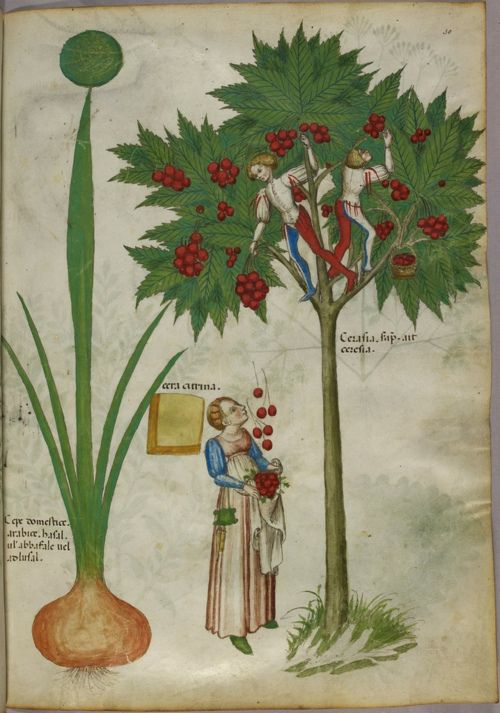 Medieval gardening how-to's.