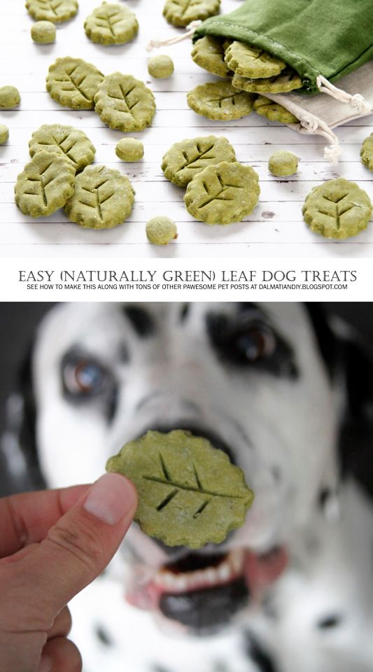 Recipe Easy Diy Leaf Dog Treats Naturally Green Dog Food