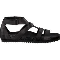Photo of Ca'Shott Sandals 21250 Black Ca'Shott