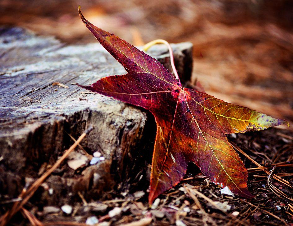 by erachel112 Meat jerky, How beautiful, Fall colors
