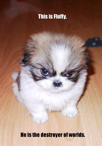 Fluffy Destroyer Of Worlds Angry Puppy Funny Dog Pictures