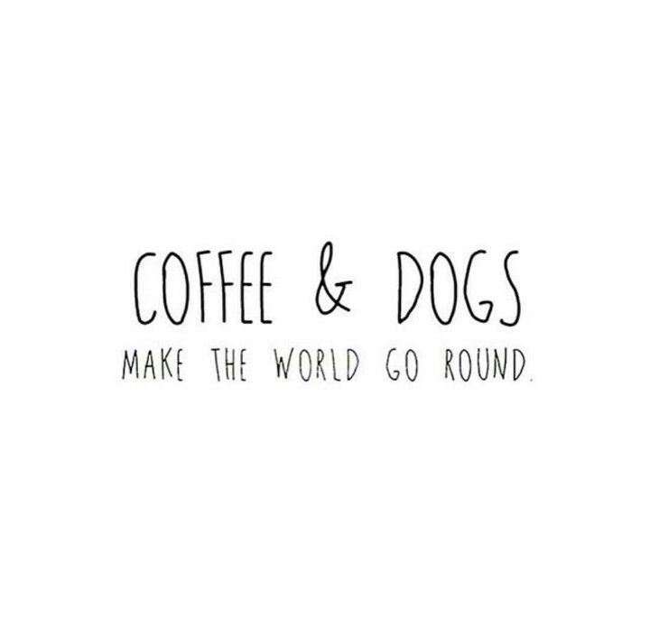 coffee and dogs rambo perros