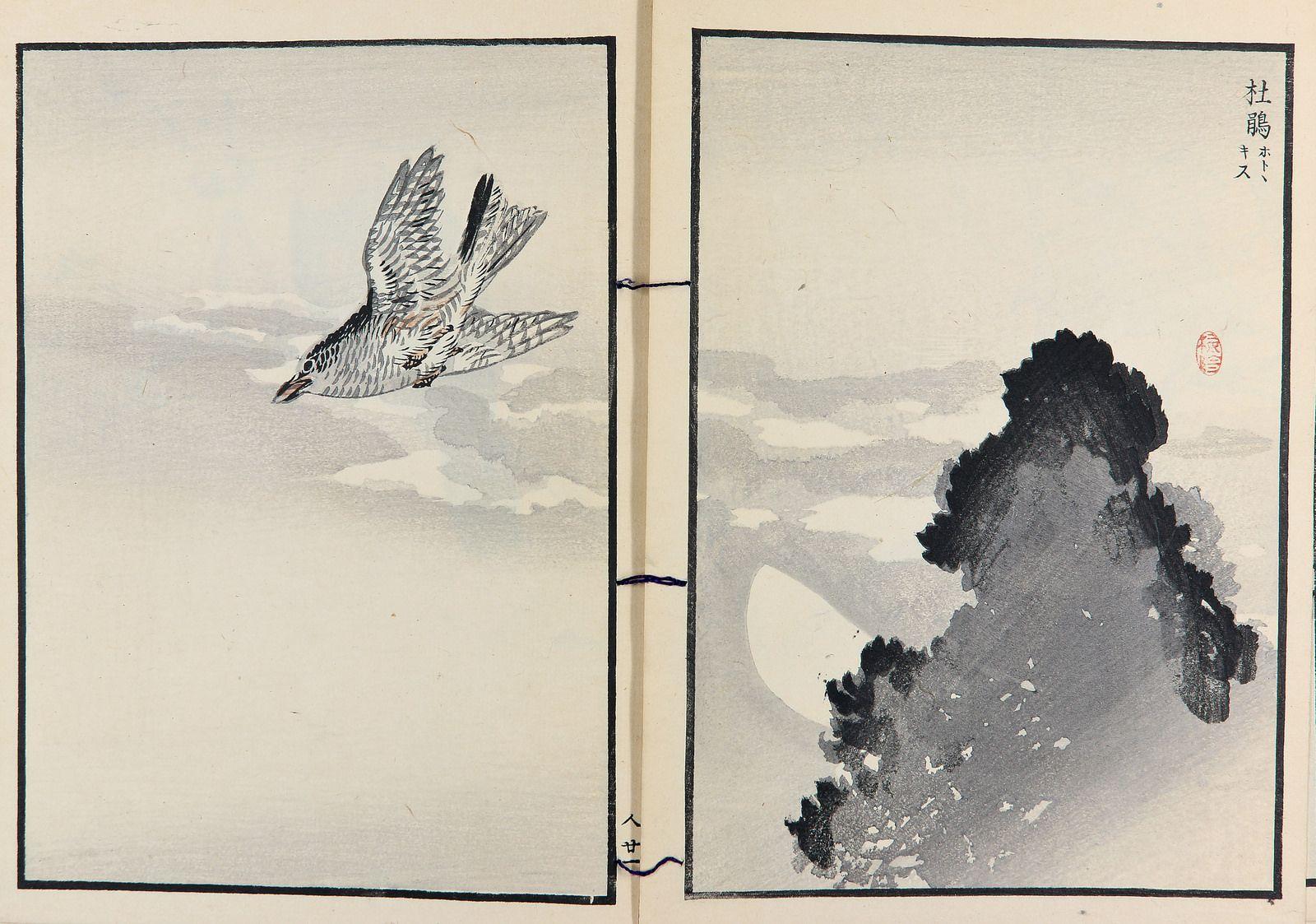 Cent espèces d'oiseaux | Flickr - Photo Sharing! Collection Takashima.