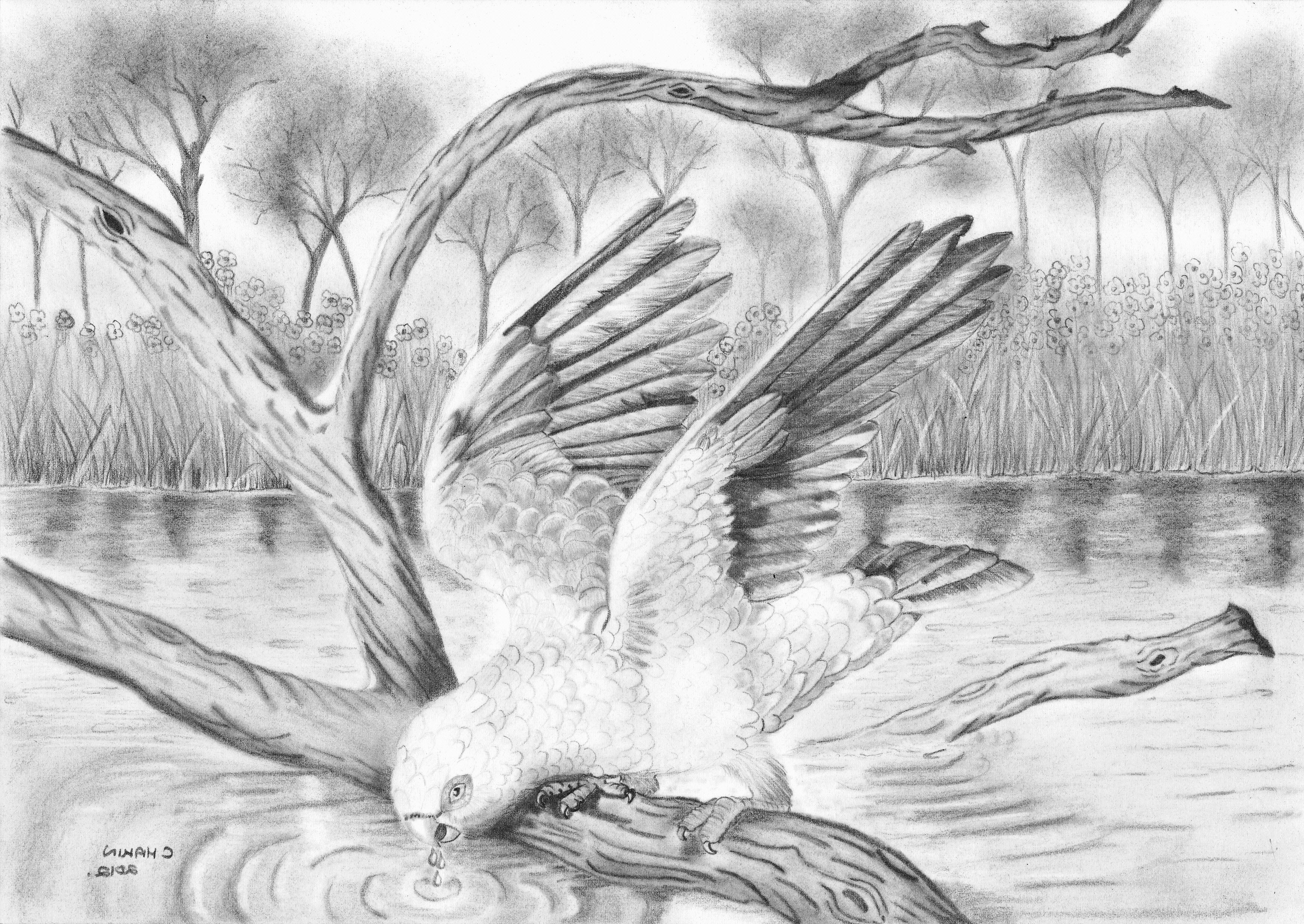 Best drawing ever of nature drawings of scenery google