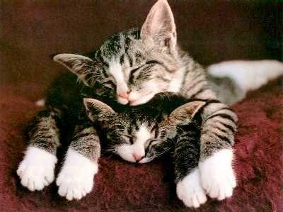 Sleepyyyyy!