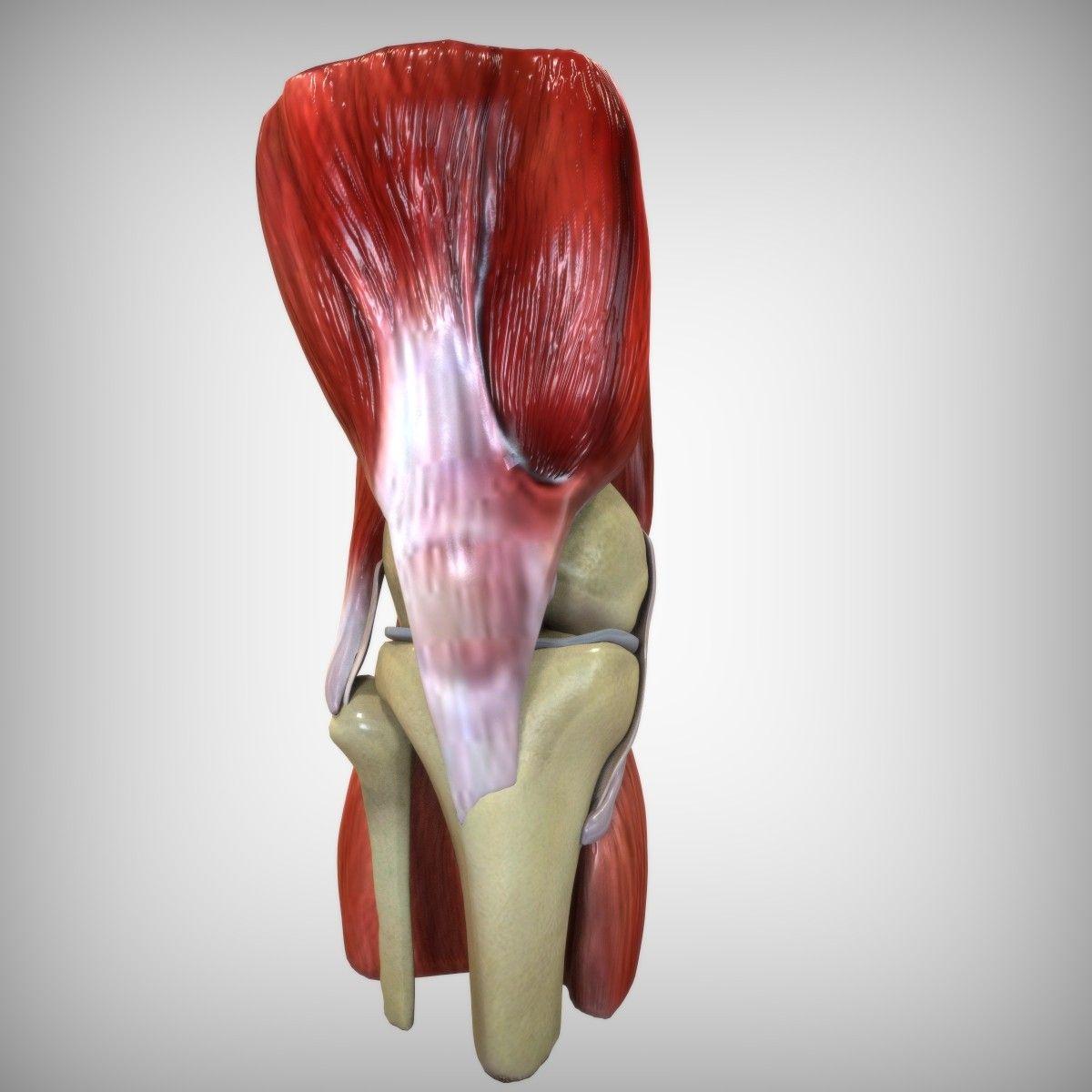 Ziemlich Menschliche Anatomie 3d Modelle Fotos - Anatomie Ideen ...