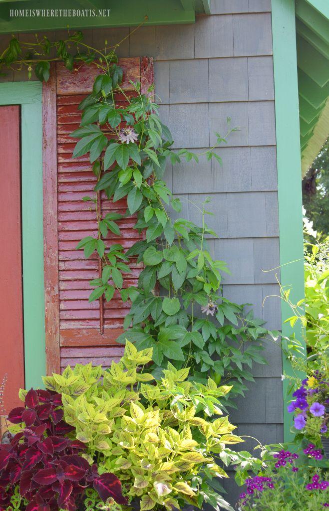 Passion vine climbing shutter | homeiswheretheboatis.net