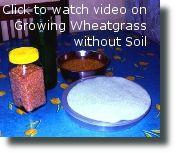Natural-Health-Supplements-wheat-Grass-Barley-Grass-AlFalFa- in-Delhi-India