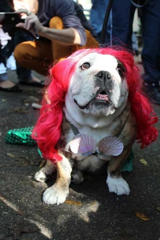 Best dog costume. & Best dog costume. | Charlotte and Me ? | Pinterest | Dog ...
