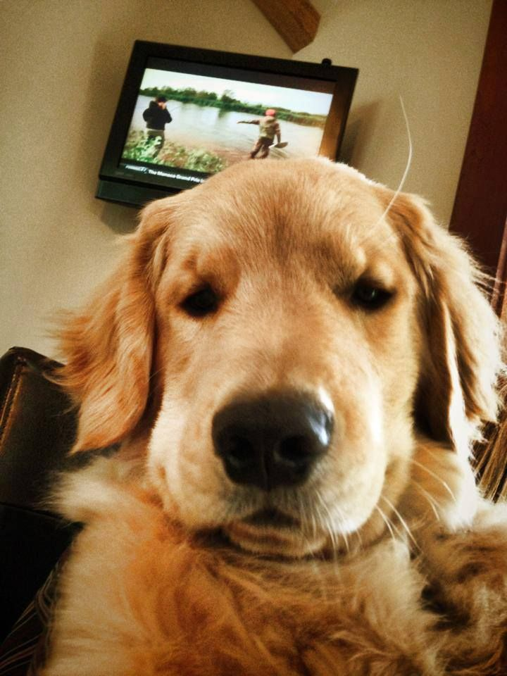Facebook Via Dog Bless You Dogs Golden Retriever I Love Dogs