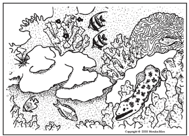 Coral Reef Coloring Pages to Print | coloring Pages | Pinterest
