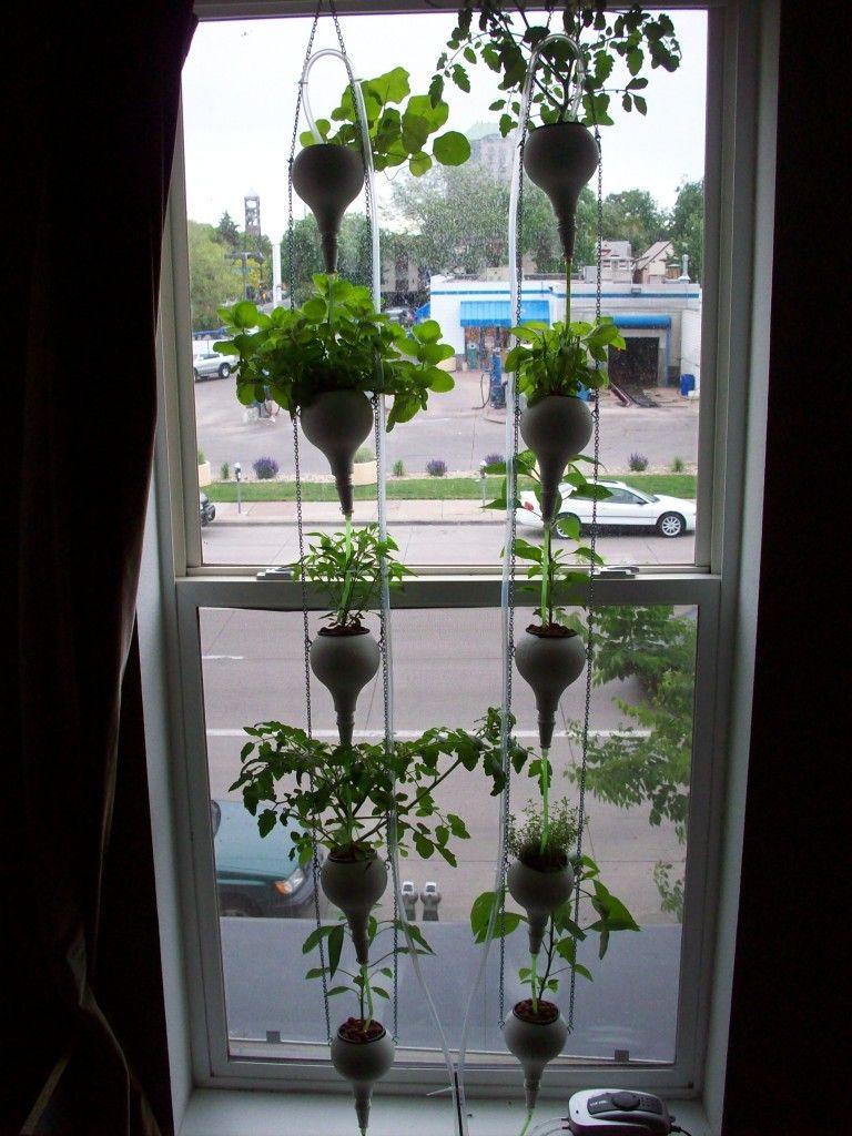 fermes fen tre fin plantes d 39 int rieur potager urbain jardins de. Black Bedroom Furniture Sets. Home Design Ideas