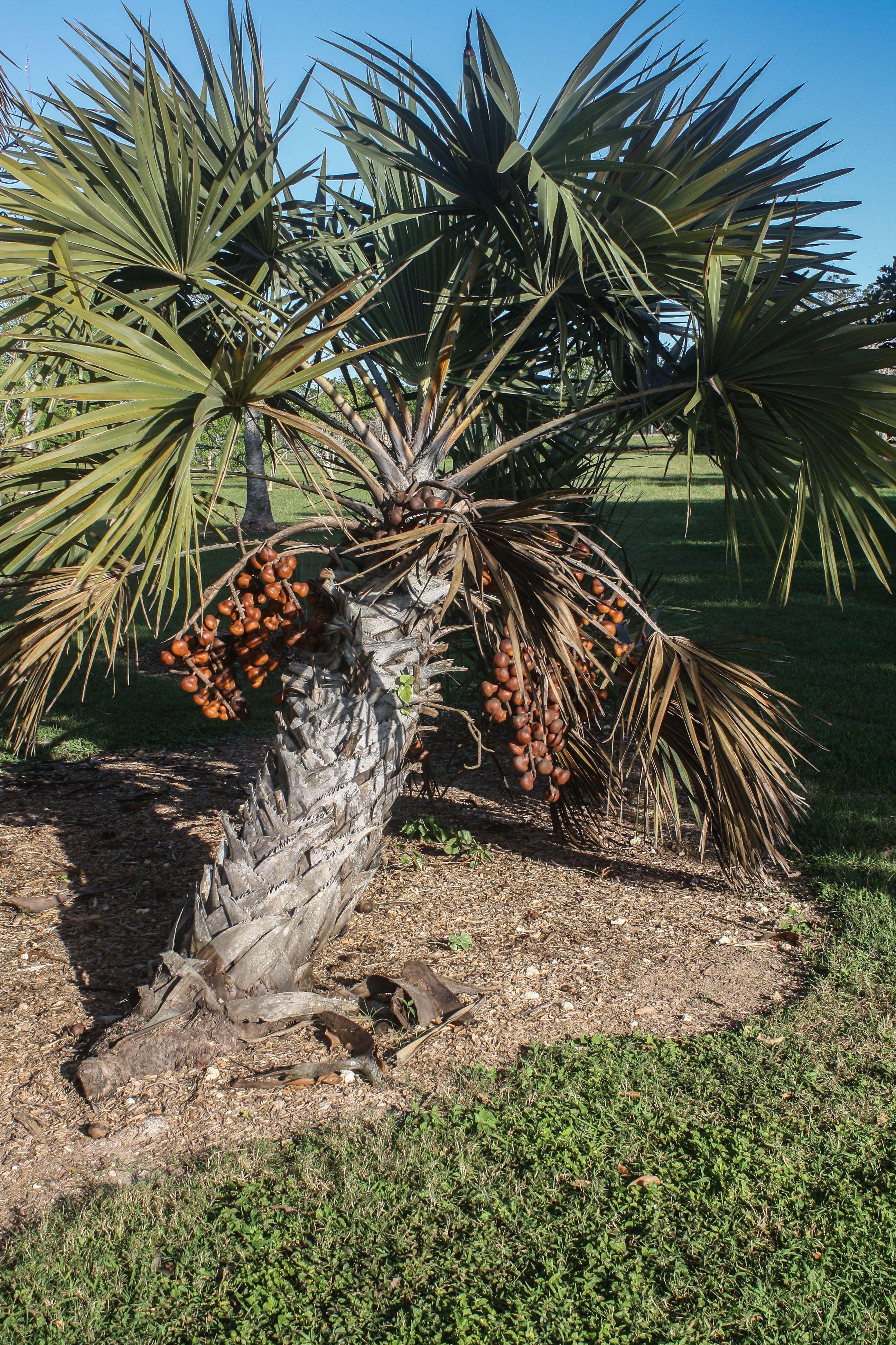 Fruit & Spice Park, Homestead, Florida Botanical gardens