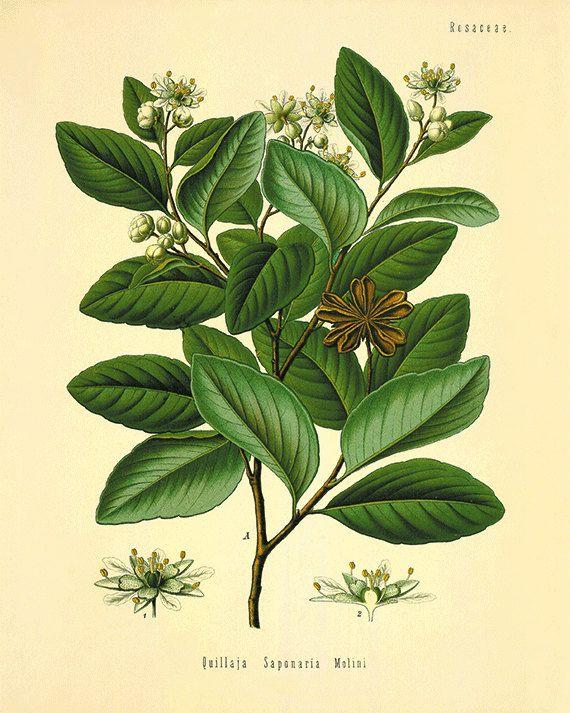 Botanical art prints Vintage prints garden wall art home decor wall ...