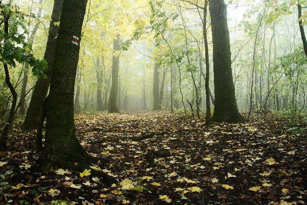 Deciduous Forest Images