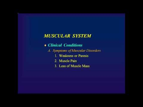 The Muscular System (Human Anatomy) Free videos, lectures, online ...