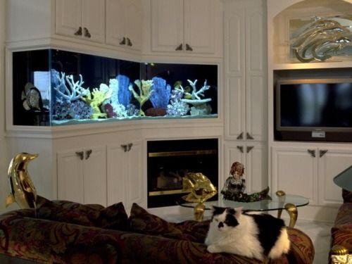 Un acuario en casa acuarios pinterest - Peceras para casa ...