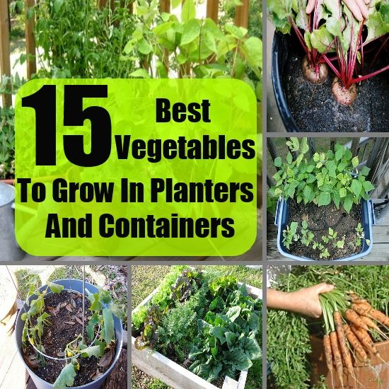 Flower Pot Vegetable Garden   Google Search