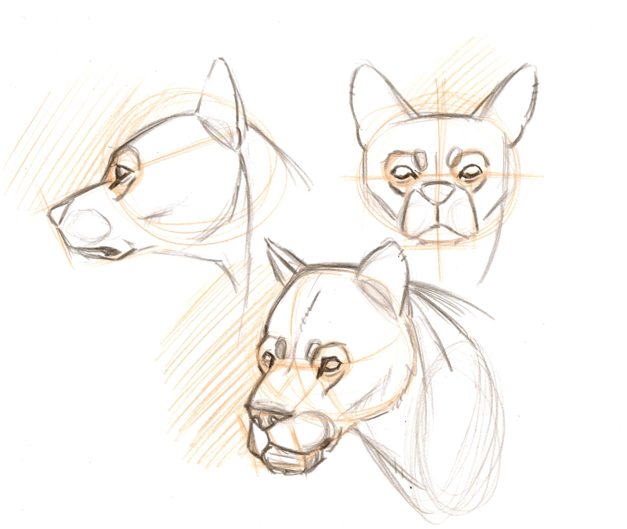 Uncategorized How To Draw Any Animal ow do you learn to draw animal heads from any angle practice drawing them from