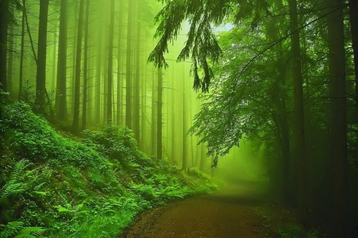 Forest, Fog, Green wallpapers