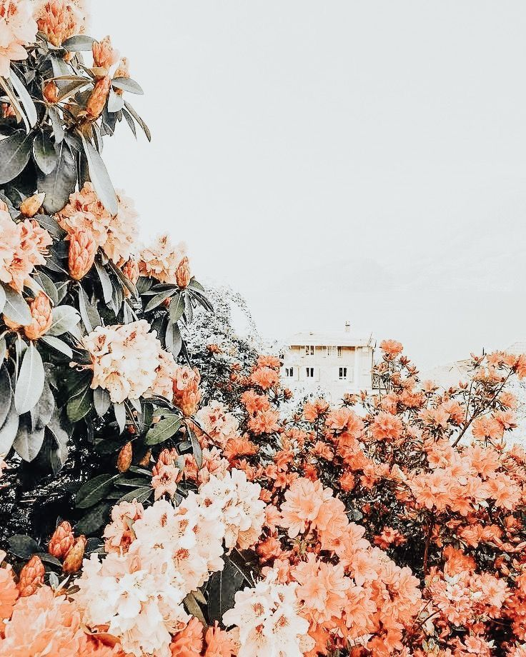 m a r y aesthetic backgrounds nature