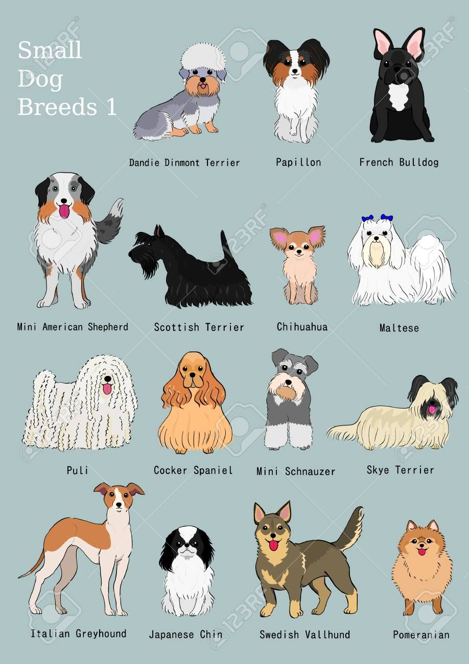 Group Of Small Dogs Breeds Hand Drawn Chart Affiliate Dogs Small Group Breeds Chart Dog Breeds Medium Dog Breed Names Dog Breeds List