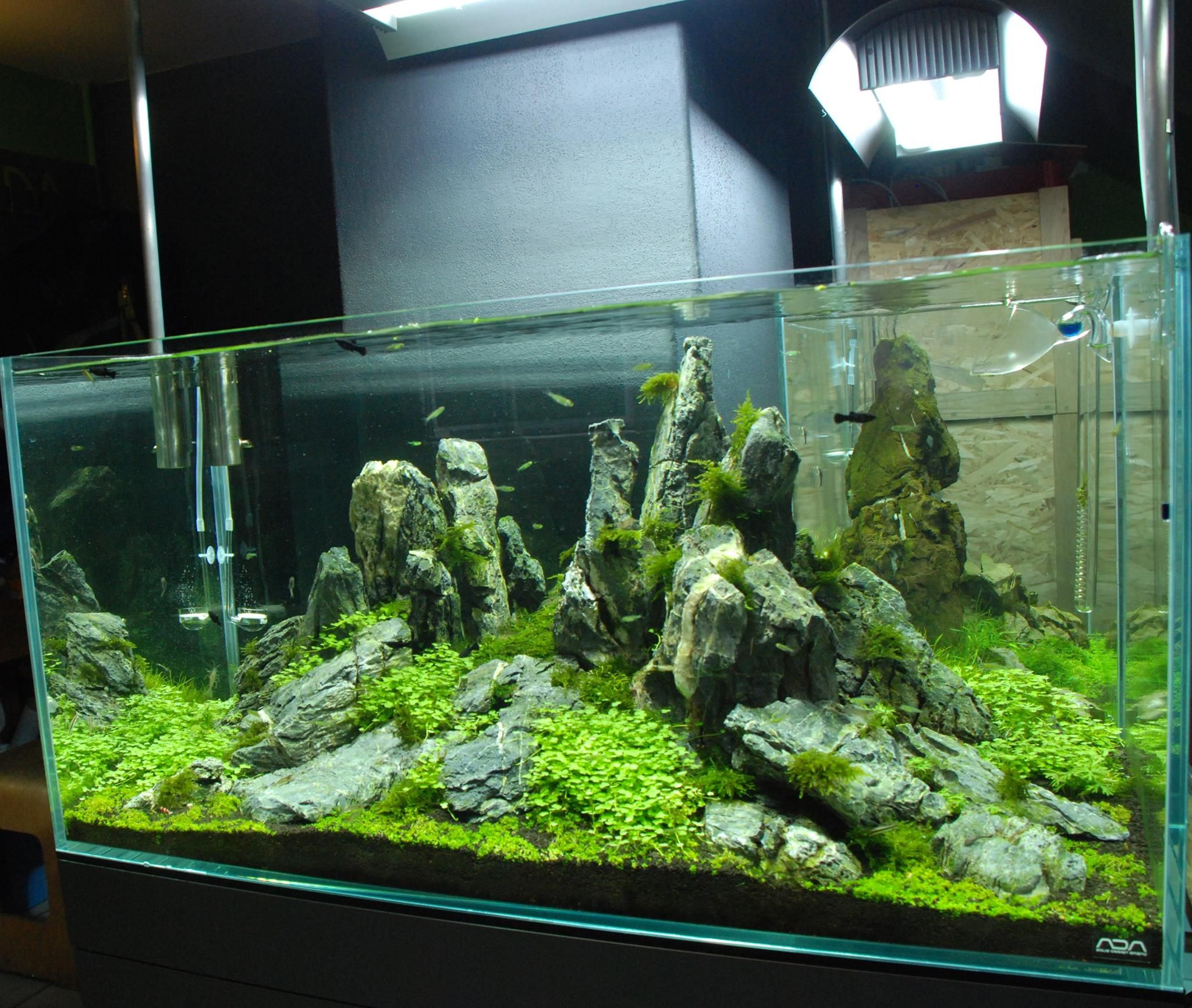 Aquascape by ada polska pin by aqua poolkoh aquarium for Ada fish tank