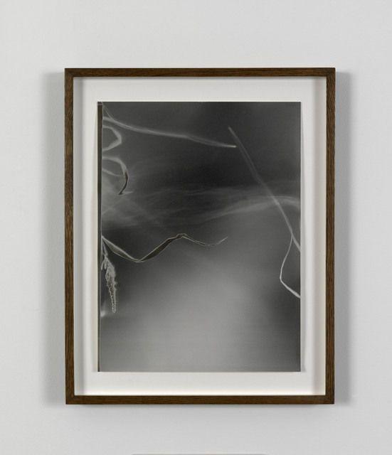 João Penalva . small wWeeds from Hiroshima (IV), 1997