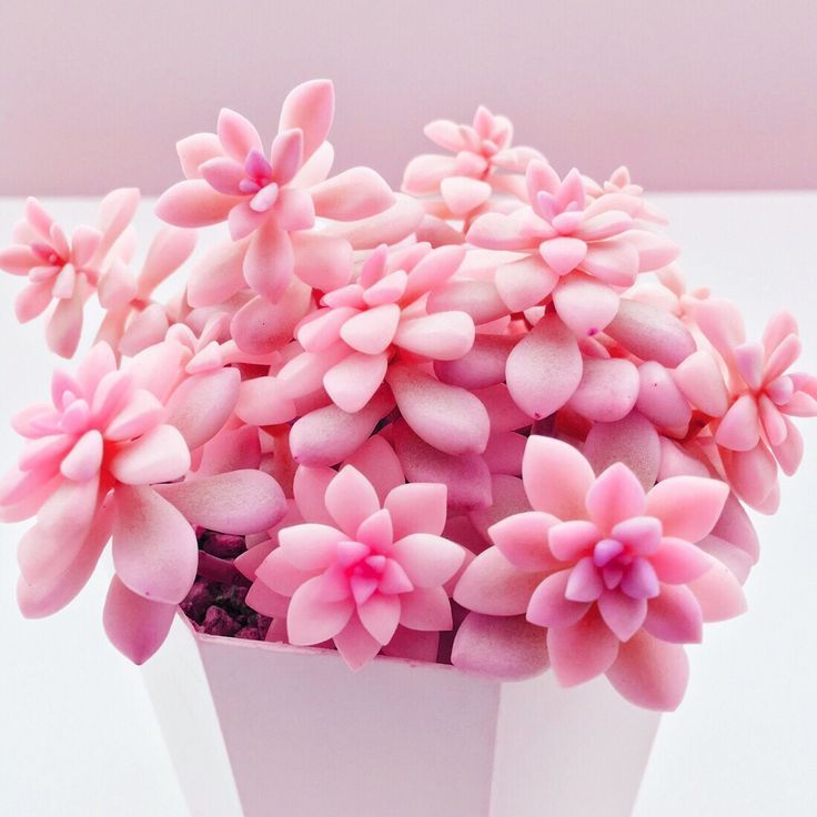 pink succulent #succulents
