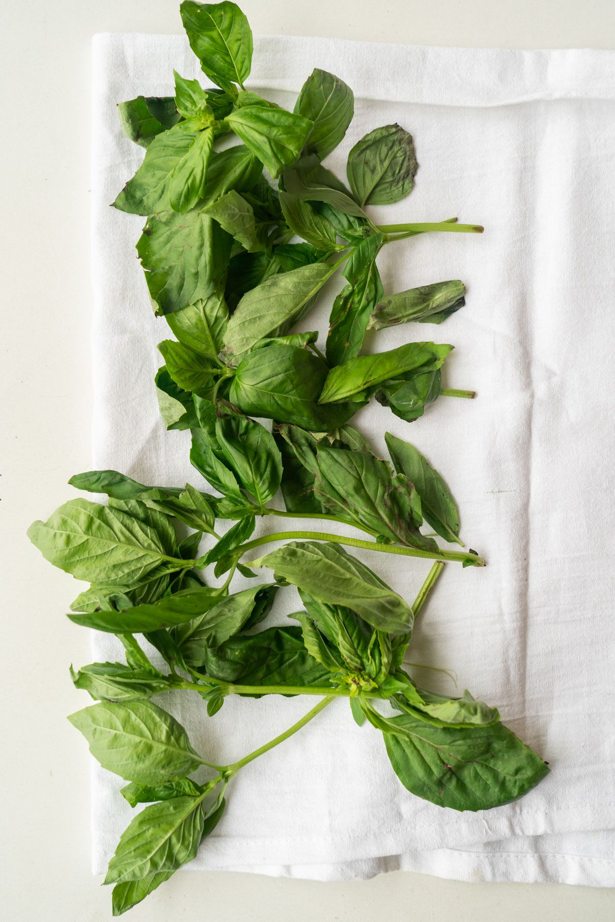 How To Dry Basil In The Oven