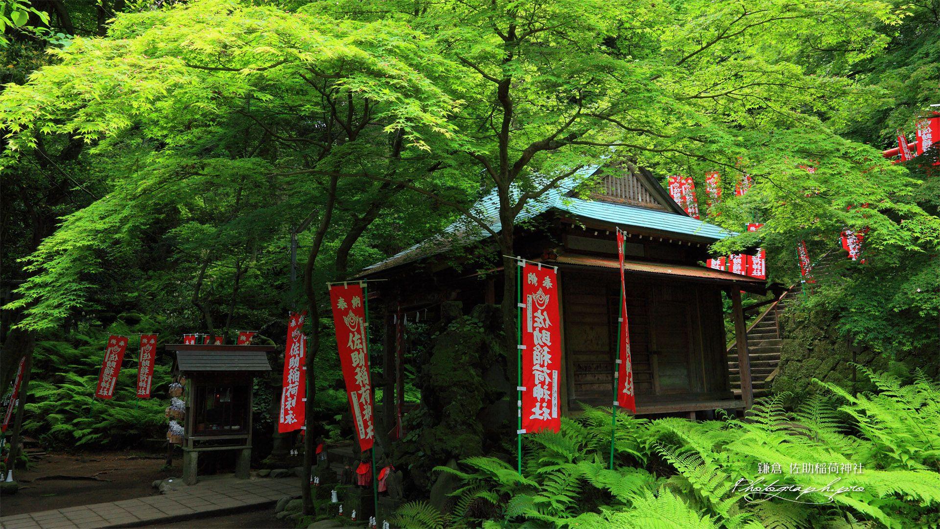 佐助稲荷神社 新緑の拝殿 の壁紙 1920x1080 Dengan Gambar