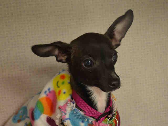 Pet Adoption At The Dumb Friends League Denver Co With Images Dumb Friends League Pet Adoption Adoption