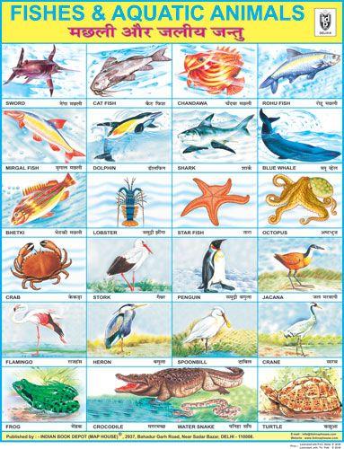 Fish Aquatic Animals Animal Flashcards Fish Chart Animals Name In English