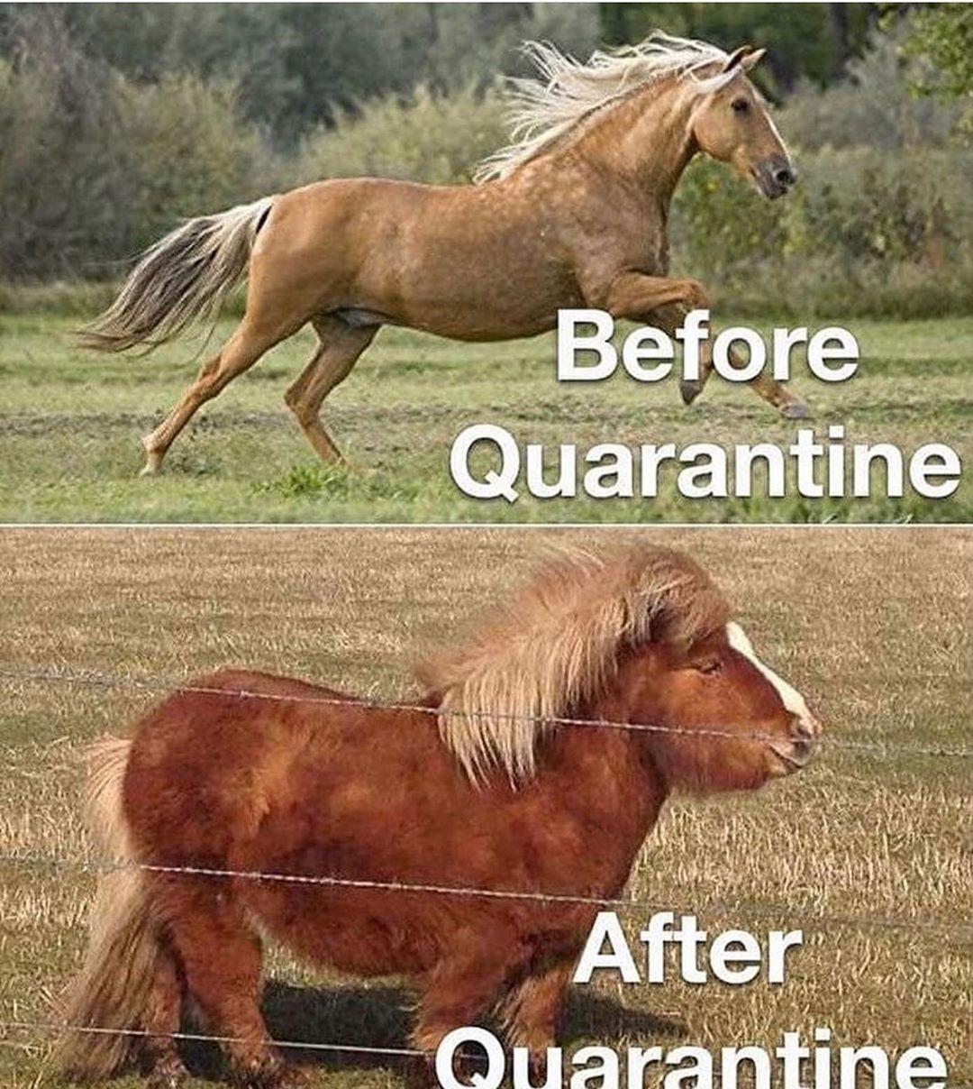 Social Distancing Horse Memes So Relevant It Hurts