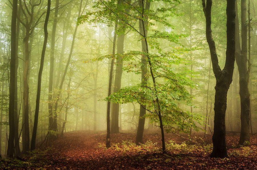 In haunted woods