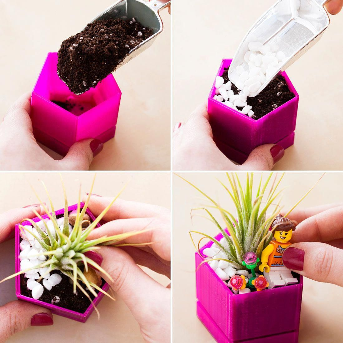Use Potting Soil Assorted Pebbles And Air Plants To Make