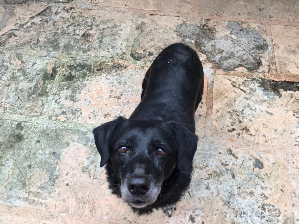Pin Von Feliz Animal Andratx Auf Feliz Animal Hunde Tierheim Alter Hund Tiere