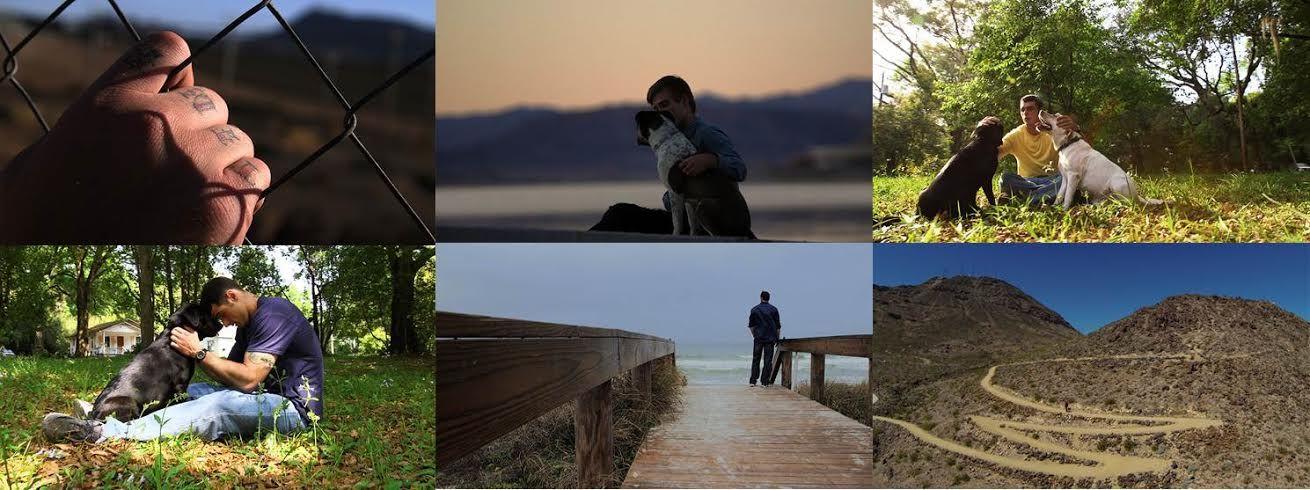 """A marca PEDIGREE®, líder mundial em alimentos para cães, estreia campanha na web """"First Days Out"""". O filme reforça o conceito """"Alimente o que há de melhor"""", e promove a importância da interação homem-animal."""