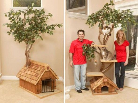 Cat House Designs | Cat Tree House Designs Inspiration With Real Trees  Furniture