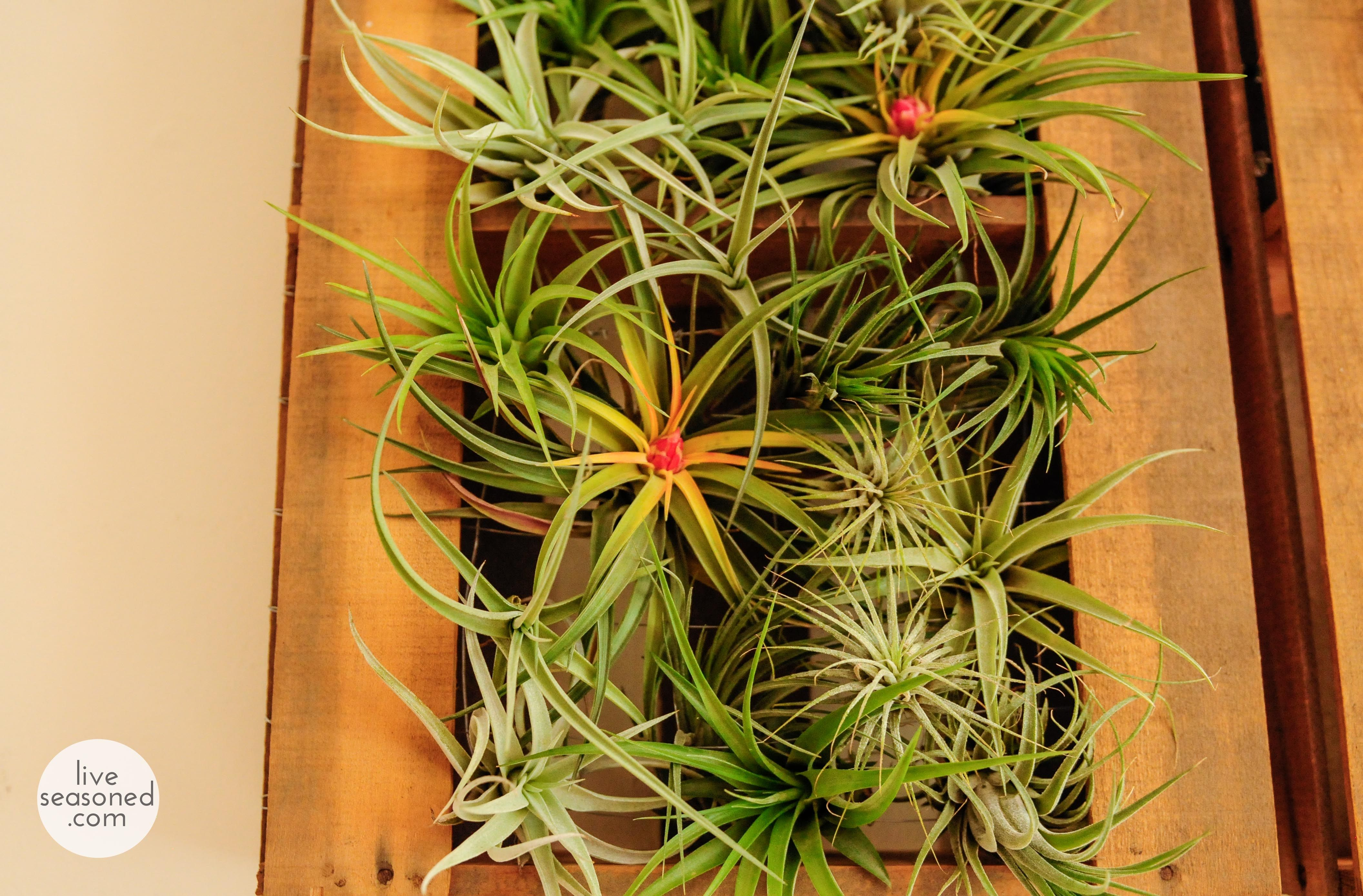 Air Plants Wholesale
