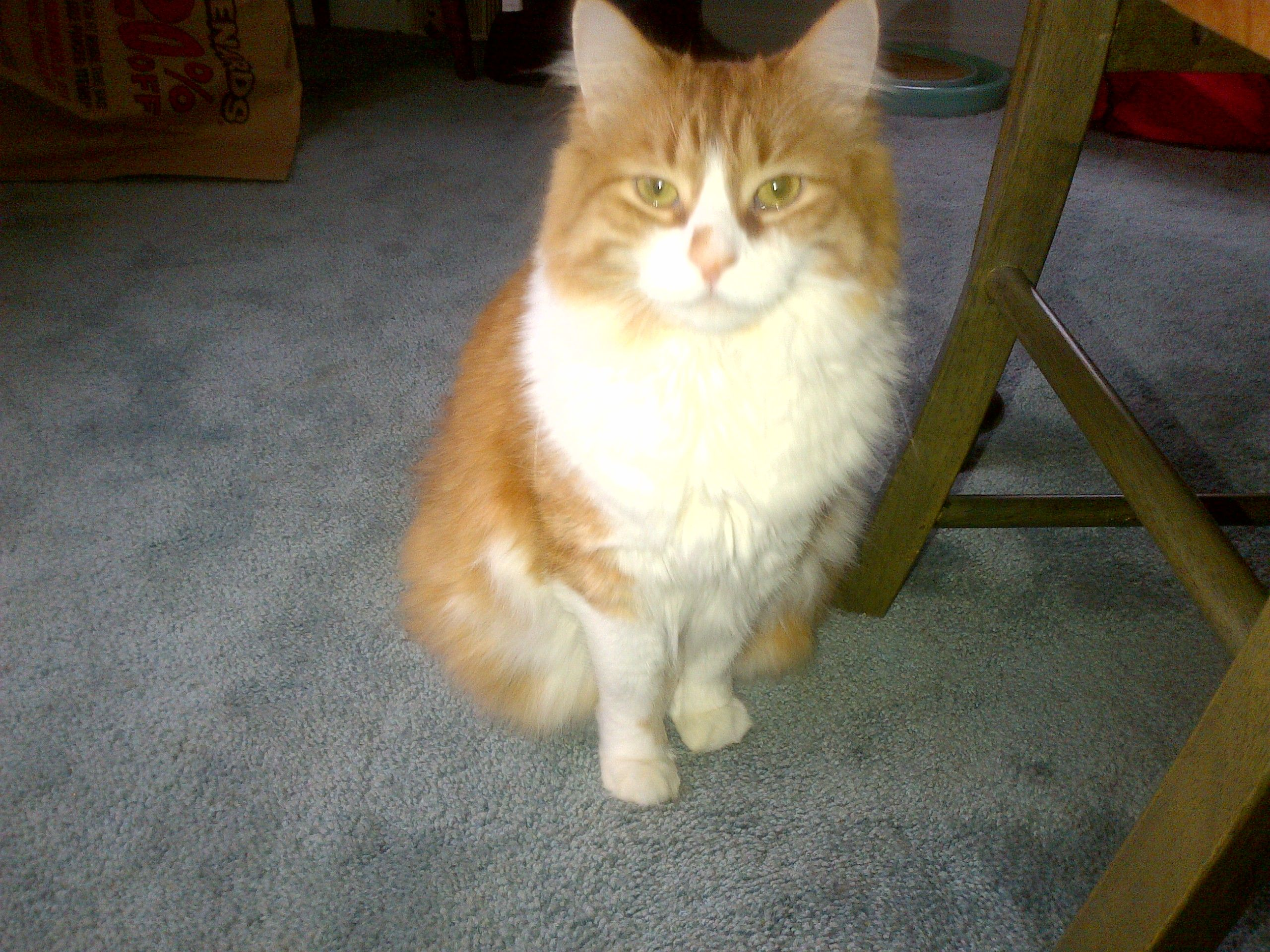 Handsome Toby