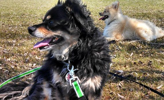 Make Your Pet Sitting Business Stand Out Dog