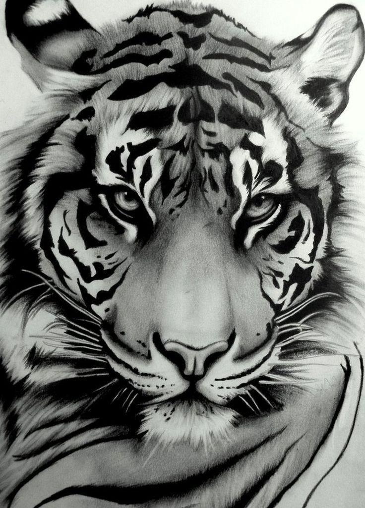 Hd Blue Eyed Tiger Wallpaper Download Free Wild Life Tierkunst Tierzeichnung Tiger Zeichnung