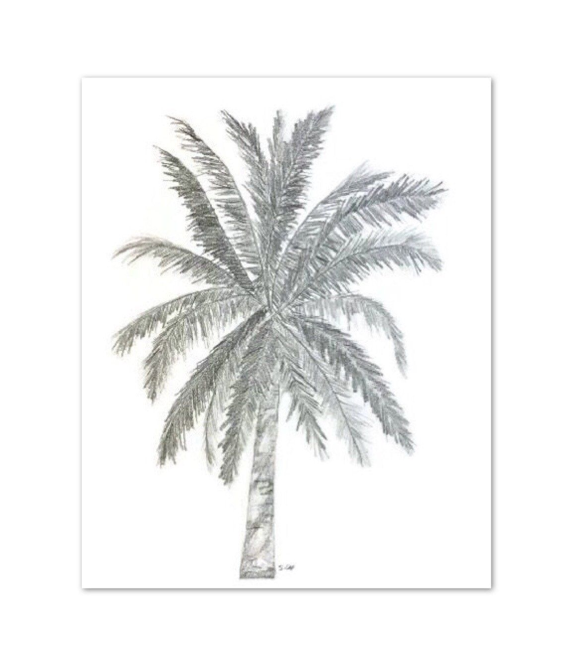 Original pencil sketch palm tree drawing tropical graphite drawing