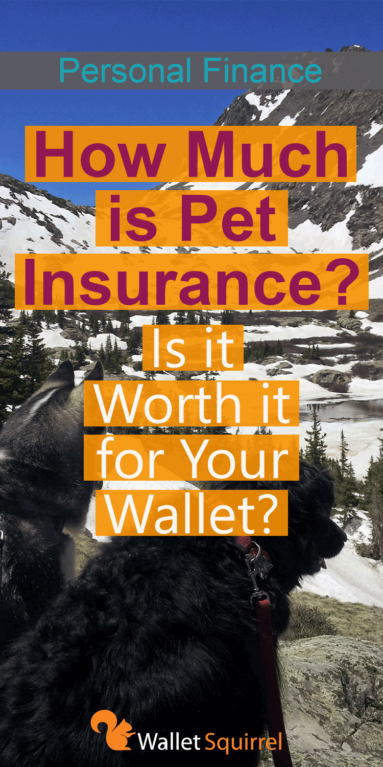 How Much is Pet Insurance Is it Worth it for Your Wallet