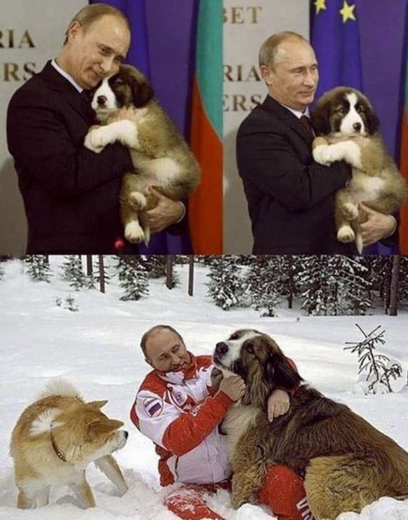 Putin. The dog whisperer.   Dog shaming funny, Funny cats ...